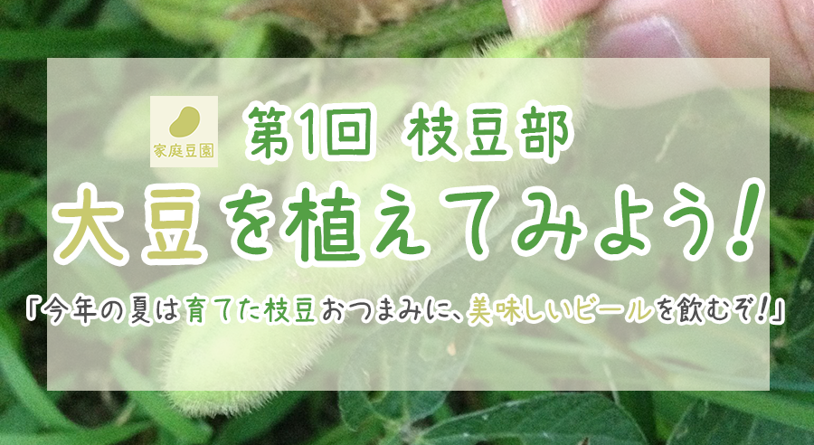 【第1回】大豆を植えてみよう!「今年の夏は育てた枝豆をおつまみにおいしくビールを飲むぞ!」
